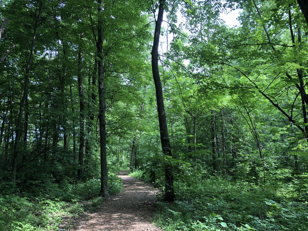 dog park woods1